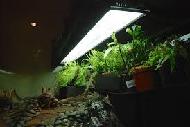 a planted rainforest redfoot terrarium v 2 tortoise forum