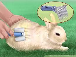 how to condition a rabbit for a show 13 steps with pictures