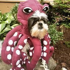 Dog Halloween Costumes Unique Kind Type Octopus Dog Halloween Costume Small