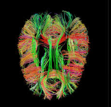 Human Brain Mapping Mapping The Mind To Build Smarter Machines
