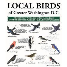 Washington birds images Greater washington d c local birds jpg