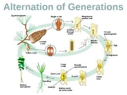 plant reproduction powerpoint presentation lesson plan by lisa