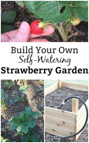 how to build a self watering strawberry garden frugal farm wife