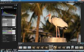 converter raw acdsee pro v 5 for windows raw conversion image editing plus free
