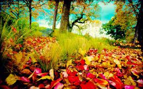 Autumn Colors My Wooden Blog Style Premium Wordpress Theme From Mythem Es