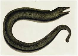 Seeking Eel Cast Eel Occultopedia The Occult And Unexplained Encyclopedia