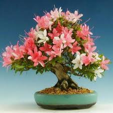 Indoor Flower Plants Bonsai Decoration Picture More Detailed Picture About Flower