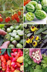 edibles fruits edibles grow forage and cook lovely greens garden