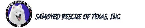 american eskimo dog rescue wichita ks samoyed rescue of texas