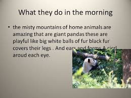 all about pandas what they do in the morning the mountains