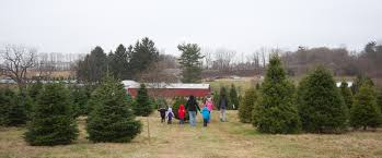 perfect christmas tree farm u2013 we have the right tree for you