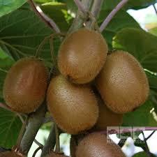 fruit by mail actinidia kiwi fruit mail order trees