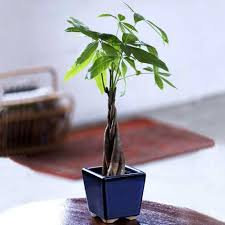 trendy small office plants 133 small office friendly plants office