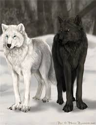 image result for black wolf white wolf wolves wolf