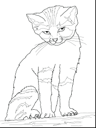 kitten coloring pages to print for free cat cute printable class