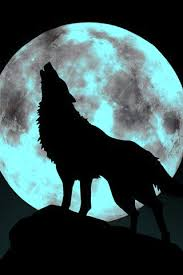 pin by albanese on wolf wolf and moon