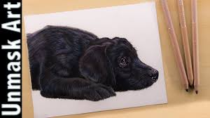 black labrador puppy colored pencil drawing lapse