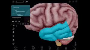 3d Human Anatomy Atlas Visible Body Virtual 3d Brain Dissection With Human Anatomy