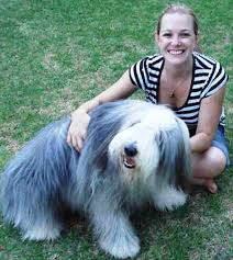 bearded collie adoption bearded collies u0026 bearded collie breeders in south africa