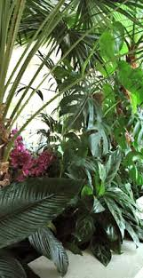 home interior plants interior plants tropical plants mediterranean plants