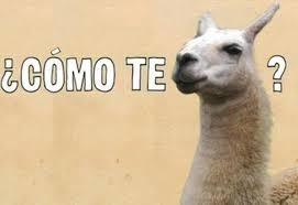 Funny Memes Spanish - funny spanish memes 20 pics