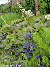 gwenfar u0027s garden and other musings garden visit helmsley walled