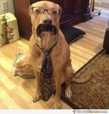 Dog With Glasses Meme - hilarious dog wearing glasses moustaches and a tie