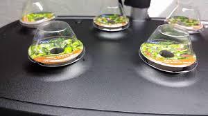 hydroponic system indoor garden aerogarden youtube