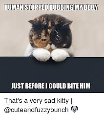 Sad Kitty Meme - human stoppedrubbing my belly just beforei could bite him that s a