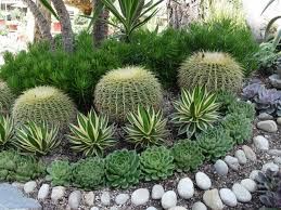 landscaping with succulents plant ideas u2014 bistrodre porch and