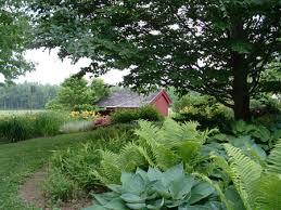 no sun plants shady trees with no partical sun plants underneath design a park