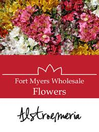Wholesale Flowers Fort Myers Wholesaleflowers Fallon U0027s Wholesale Florist Of