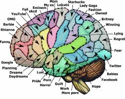 Brain Meme - on memetics big brains as meme nests