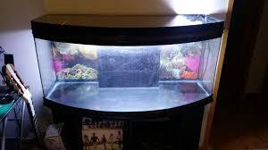chambre aquarium lancement d un lowtech 240l