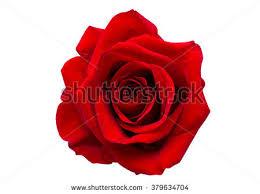 D Roses Rose Banque D U0027images D U0027images Et D U0027images Vectorielles Libres De