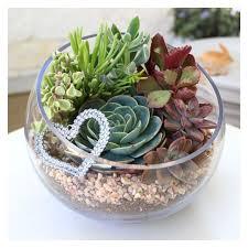 resume modernos terrarios suculentas mejores 75 imágenes de plant diy terrariums en pinterest