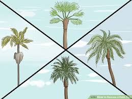 3 ways to remove a palm tree wikihow