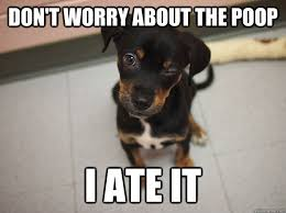 Dog Poop Meme - don t worry about the poop i ate it awesome dog quickmeme