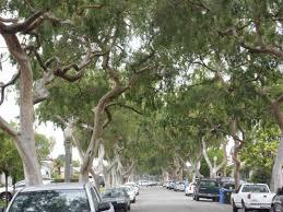 24 best backyard trees images on pinterest backyard trees