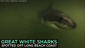 sharks 6abc com