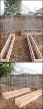 having a small backyard shouldnt stop you from growing any kind of