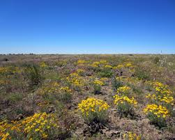 native plant and seed programs natural resources native plant communities native