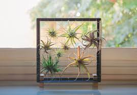 Home Wall Display Stunning Air Plant Wall Display 62 With Additional Trends Design