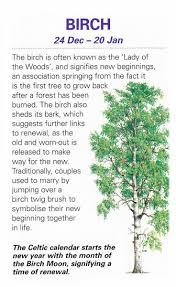 symbolism trees birch tree trees pinterest