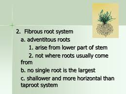Part Of Flowers - chapter 4 roots stems and leaves vegetable root stem leaf
