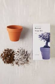 miniature indoor bonsai tree urban outfitters