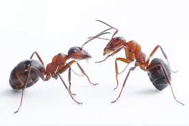 fourmis dans la cuisine comment faire pour éliminer les fourmis cuisine retrait des fourmis