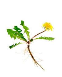 crossbow weed killer lovetoknow