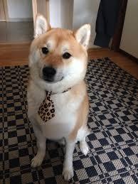 Doge Meme Best - doge meme business meme best of the funny meme