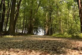 Ohio forest images Free photo ohio forest woods nature free image on pixabay jpg
